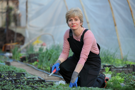 smiling woman in a greenhouse: Farmer planting tomato seedlings in a greenhouse, real people no retouch