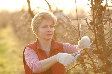 mid adult female: Mid adult female pruning tree in orchard selective focus on face Stock Photo