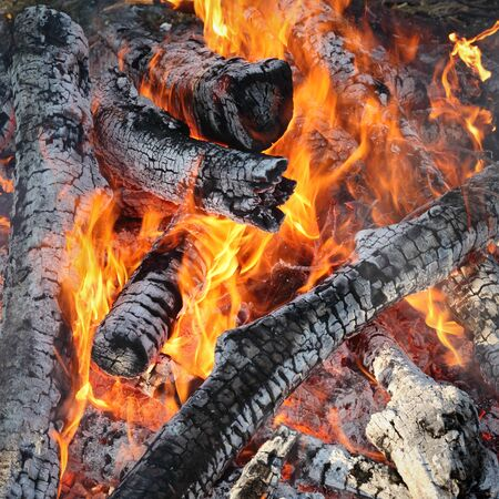ember: Close up of fire, wooden logs burning