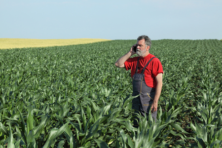 Farmer  inspect quality of corn and speaking with mobile phone