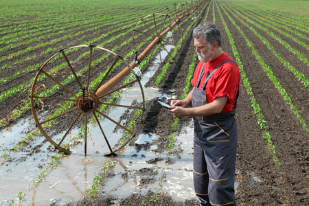 irrigation field: Agriculture farmer  inspect paprika field with irrigation system using  tablet