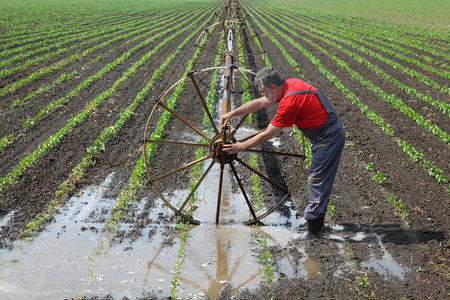 irrigation equipment: Agriculture farmer in paprika field fix irrigation system