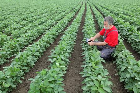 agricultor: Agricultor o agrónomo examinan planta de soja en el campo que usa la tableta Foto de archivo
