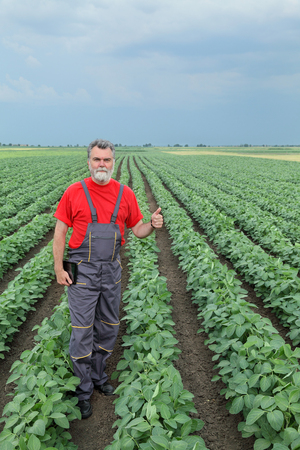 agronomist: Farmer or agronomist examine soybean plant field and gesturing