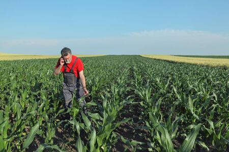 agronomist: Agriculture, farmer or agronomist inspect quality of corn and speaking with mobile phone