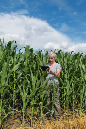 agronomist: Female agronomist or farmer  inspect quality of corn using tablet