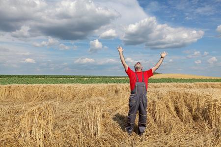 desperate: Agricultura, agricultor desesperado gesticulando en campo de trigo da�ado despu�s de la tormenta Foto de archivo