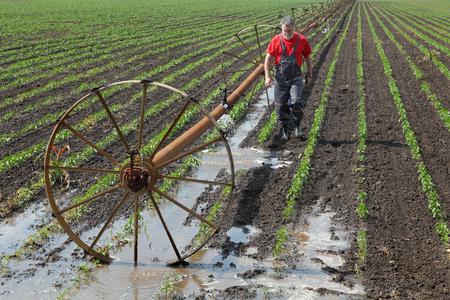 Landbouw scène, boer in paprika veld en irrigatiesysteem