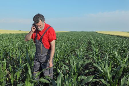 agronomist: Agriculture, farmer or agronomist  inspect quality of corn and speaking with mobile phone Stock Photo
