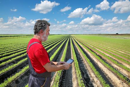zanahoria: Agricultor o agrónomo examinan planta de zanahoria en el campo que usa la tableta