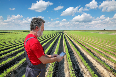 Farmer or agronomist examine carrot plant in field using tablet Stock Photo