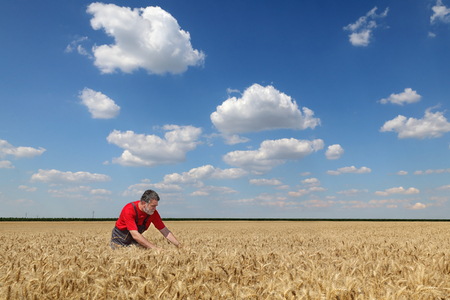agronomist: Farmer or agronomist  inspect quality of wheat field with beautiful sky