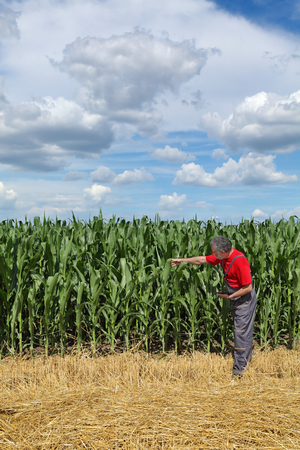 the farmer: Farmer or agronomist  inspect quality of corn with tablet in hand Stock Photo