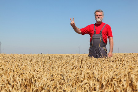 hand sign: Agriculture,  farmer gesturing  in wheat field ready to harvest, hand sign V