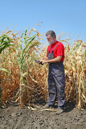 agronomist: Farmer or agronomist examine corn plant in field using tablet, harvest time Stock Photo