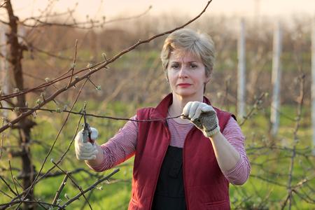 arboles frutales: adultos de mediana árbol de la poda de la mujer en la huerta, el enfoque selectivo Foto de archivo
