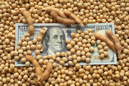 cash crop: Agricultural concept, heap of soy beans and dollar banknotes