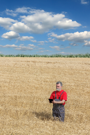 agronomist: Farmer or agronomist examine wheat plant in field using tablet, harvest time
