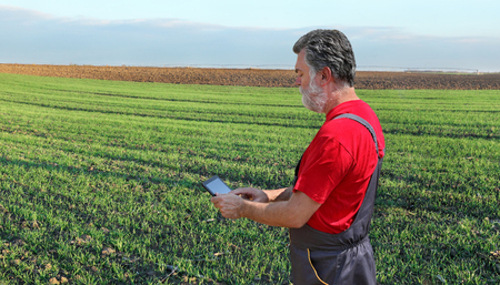 agronomist: Farmer or agronomist inspect quality of wheat plant in field, using tablet