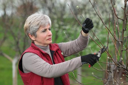 albero da frutto: La metà degli adulti potatura di alberi di sesso femminile nel frutteto fuoco sul viso