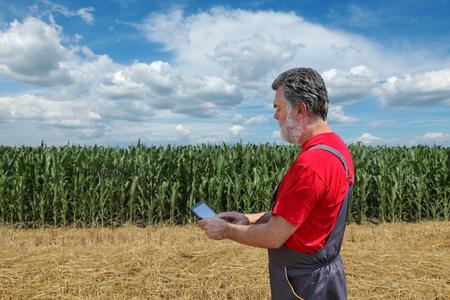 agronomist: Farmer or agronomist examine corn plant  field using tablet