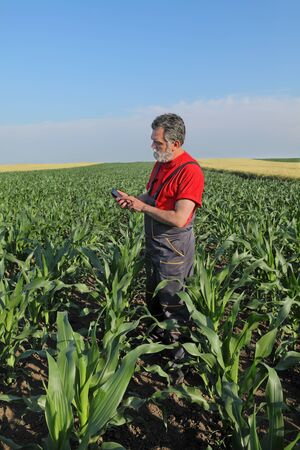 agronomist: Farmer or agronomist inspect quality of corn using phone or tablet Stock Photo