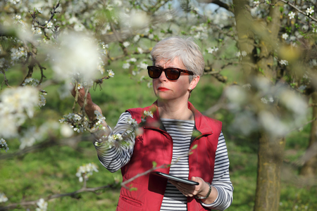 agronomist: Agronomist or farmer examine blooming plum trees in orchard, holding tablet Stock Photo