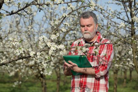 inspecting: Agronomist or farmer examine blooming plum trees in orchard, and writing data