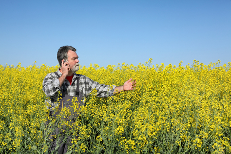 oil rape: Farmer  inspect quality of canola field and speaking with mobile phone Stock Photo