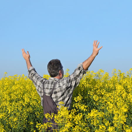 canola plant: Satisfied farmer with hands up in blooming canola plant field, oil seed rape