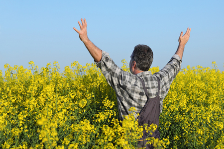 oil rape: Satisfied farmer with hands up in blooming canola plant field, oil seed rape
