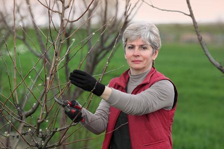 Mediados de adultos mujer poda de árboles en el huerto enfoque selectivo en la cara