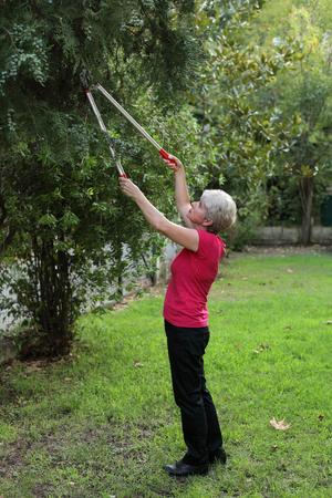 paysagiste: Aménagement paysager, femme adulte coupé arbre dans un jardin
