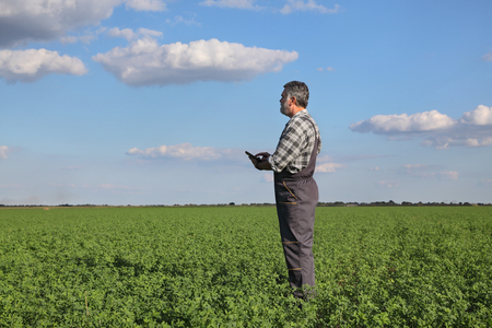 agronomist: Farmer or agronomist examine clover plant in field, using tablet