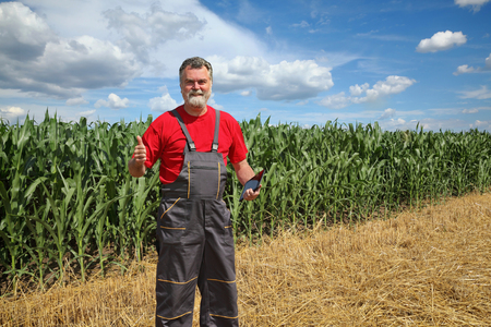 agronomist: Agronomist or farmer examine corn field using tablet and gesturing, thumb up
