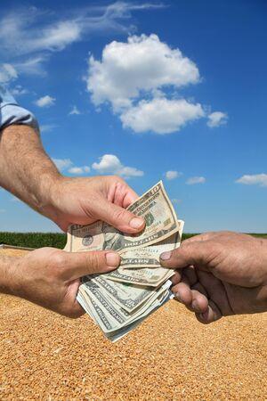 cultivo de trigo: Agricultores y compradores manos que sostienen los billetes de dólares, la cosecha de trigo en el fondo