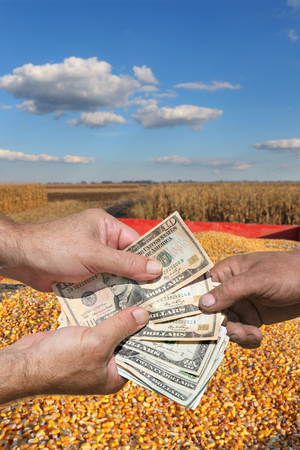 a crop: Farmer and buyer hands holding dollar banknote, corn crop in background Stock Photo