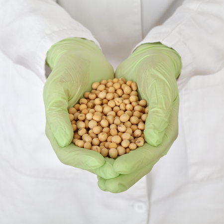 Human hands in gloves holding heap of soy bean, sample for genetic testing