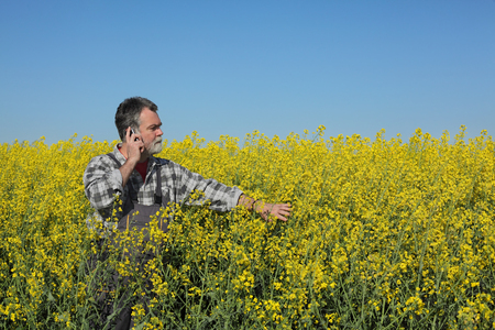 campesino: Farmer  inspect quality of canola field, speaking with mobile phone