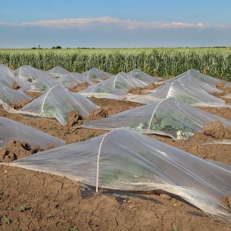 glasshouse: Field of watermelon or melon plants under small protective plastic greenhouses Stock Photo