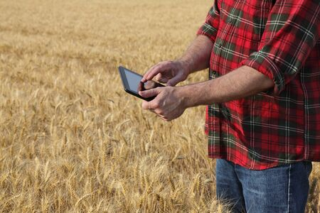 agronomist: Agronomist or farmer  inspecting quality of wheat plant field using tablet, ready for harvest