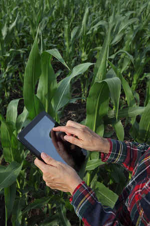 Agronomist or farmer  inspecting quality of green corn plant field using tablet photo