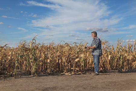 Agriculteur ou agronome examiner les plants de maïs dans le champ après la sécheresse en utilisant la tablette Banque d'images - 88425450