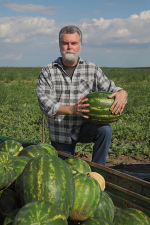 Farmer selling watermelons, and holding one to show quality, farmers market Фото со стока