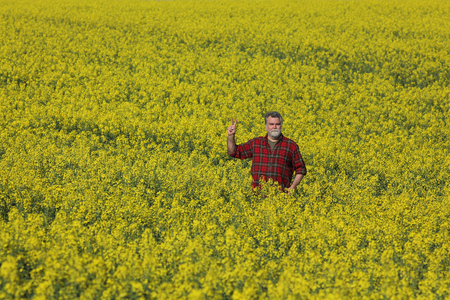 Agronomist or farmer examining blossoming canola field and gesturing with hand up, rapeseed plant in early spring