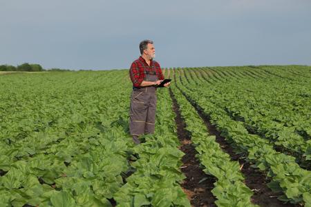 Rolnik lub agronom sprawdzający jakość zielonego pola słonecznika wiosną za pomocą tabletu Zdjęcie Seryjne
