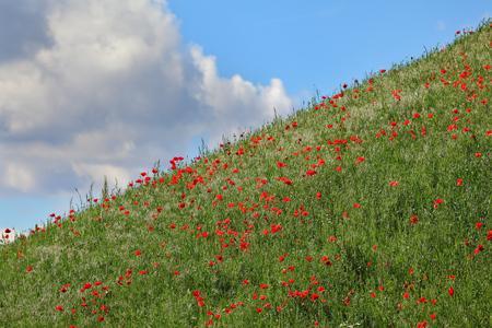 Hill with grass and red poppy with sky in background