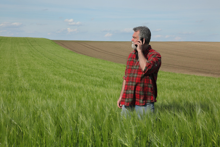 Farmer or agronomist  inspecting quality of wheat plants in field and speaking by mobile phone, agriculture in spring