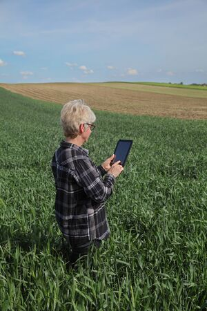 Female farmer or agronomist inspect quality of green wheat in field using tablet, agriculture in spring time