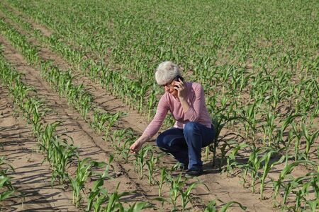 Female farmer or agronomist  inspecting quality of corn plants in field speaking by mobile phone and touching plants